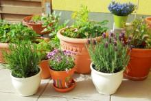 Beginner's Guide to Urban Gardening